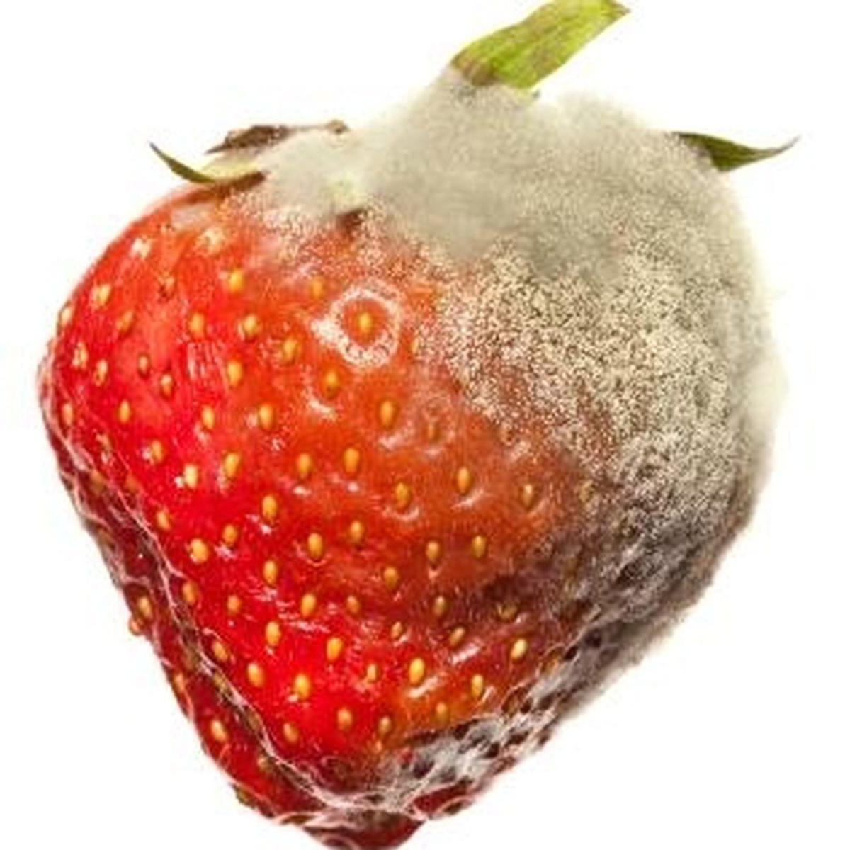 Do You Eat Moldy Fruit Like Strawberries Or Bananas Fruit That Is On Its Way Out Or Should Be Thrown Out Amirite